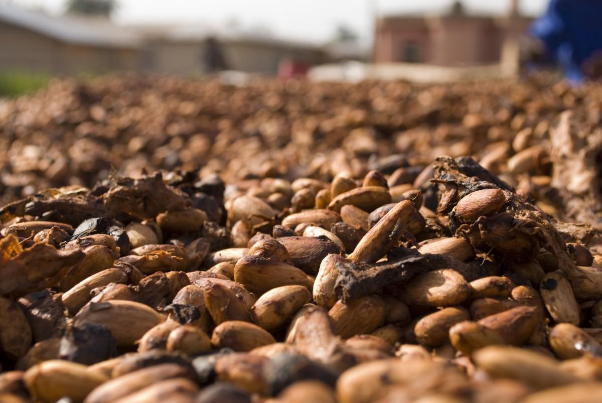 ¿Conoces todos los beneficios del cacao?